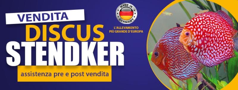 Discus Stendker
