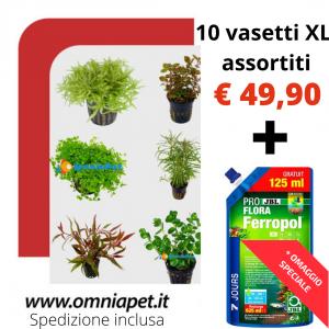 Assortimento 10 piante+Ferropol 625ml